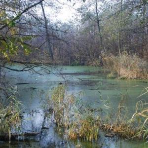 Jak utrzymać partnerską sieć dla ochrony rzeki Wisłok – Konferencja